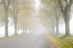 Kolorowa wapna drzewa aleja wzdłuż drogi Zdjęcie Royalty Free