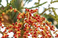 Kolorowa wiązka areki drzewo z zielonym natury bokeh backgroun Obrazy Stock