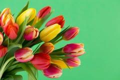 Kolorowa wiosen powitań karta z tulipanami dla wielkanocy, Macierzysty ` Obrazy Royalty Free