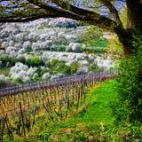kolorowa wiosna Zdjęcie Royalty Free