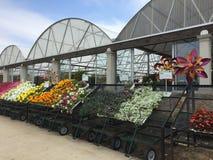 Kolorowa wiosna kwitnie dla sprzedaży przy sklepem Obraz Royalty Free