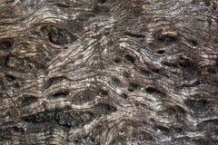 Kolorowa wzorzystości powierzchnia drewno dla tła Zdjęcie Stock