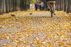 Kolorowa złota aleja w jesień parku Mężczyzna jedzie bicykl daleko od grupa przyjaciele na zamazanym tle Zdjęcia Stock