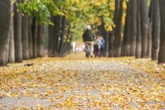 Kolorowa złota aleja w jesień parku Mężczyzna jedzie rowerowy oddalony rozmytego Obraz Stock
