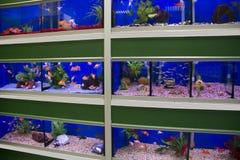 Kolorowa zimna woda i tropikalni rybi akwaria fotografia stock