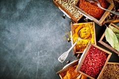 Kolorowe świeże wysuszone pikantność w popierają kogoś granicę Fotografia Stock