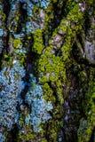 kolorowe życia obrazy stock