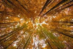 kolorowe baldachim jesieni Obraz Stock