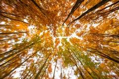 kolorowe baldachim jesieni Fotografia Stock