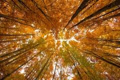 kolorowe baldachim jesieni Obrazy Royalty Free