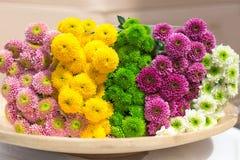 kolorowe chryzantemy kwitną na drewnianym talerzu Zdjęcia Stock