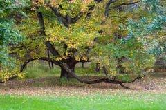 kolorowe drzewo Zdjęcia Stock