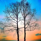 kolorowe drzewo Fotografia Stock