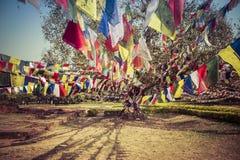 kolorowe drzewo Zdjęcie Royalty Free