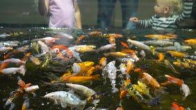 Kolorowe egzotyczne ryby i rodzina ludzi je karmi Ruch Gimbona zbiory wideo