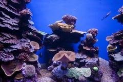Kolorowe egzotyczne tropikalne ryba podwodne w akwarium obrazy royalty free