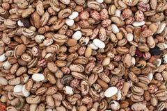 Kolorowe fasole, haricot fasoli tło Różnorodne wysuszone legume fasole dla tła Tapeta białe dojrzałe fasole Zdrowy zdjęcie stock