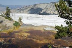 Kolorowe geologiczne formacje na tarasach przy Mamutowymi Gorącymi wiosnami Tarasują, Yellowstone park narodowy, Wyoming, usa Zdjęcia Royalty Free