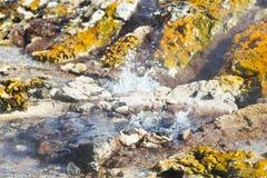 Kolorowe Gorące wiosny Przy Jeziornym Bogoria, Kenja Fotografia Royalty Free