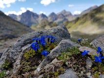 kolorowe góry Zdjęcia Royalty Free