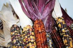 kolorowe hindusów kukurydziany Zdjęcie Royalty Free