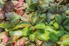 kolorowe jesieni Zdjęcie Royalty Free