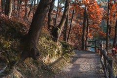 kolorowe jesieni zostaw widokiem las zdjęcia royalty free