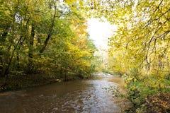 kolorowe jesieni zostaw widokiem las Obrazy Stock