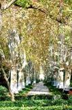 kolorowe jesieni zostaw widokiem las Fotografia Stock