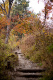 kolorowe jesieni zostaw widokiem las Obraz Royalty Free