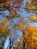 kolorowe korony drzew Obraz Royalty Free