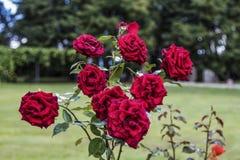 kolorowe kwiaty Zdjęcia Royalty Free