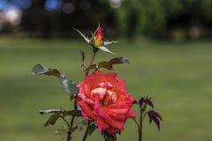kolorowe kwiaty Obraz Royalty Free