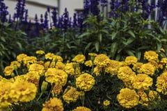 kolorowe kwiaty Fotografia Stock