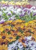 kolorowe kwiaty Obrazy Stock