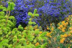 kolorowe kwiecisty t?a projekta ogrodnictwo fotografia stock