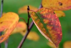 kolorowe liści, Zdjęcia Stock