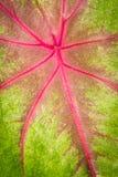 kolorowe liści, Obrazy Royalty Free