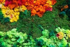 kolorowe liszaj zdjęcie stock