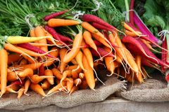 Kolorowe marchewki obrazy stock