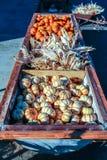 Kolorowe miniaturowe banie dla sprzedaży przy Halloweenową dyniową łatą Fotografia Stock