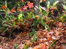 kolorowe ogród Zdjęcia Stock