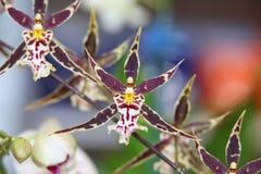 Kolorowe orchidee Obraz Stock