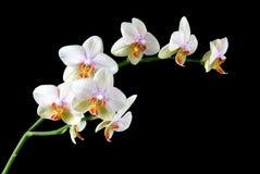 kolorowe orchidee Zdjęcie Stock