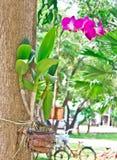 Kolorowe orchidee w ogródzie Fotografia Royalty Free
