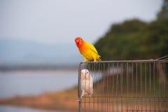 kolorowe papug Obrazy Royalty Free