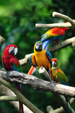 kolorowe papugi zdjęcie royalty free