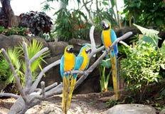 kolorowe papugi trzy Zdjęcia Royalty Free