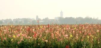 kolorowe pola kwiatów Zdjęcia Royalty Free
