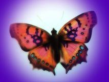 kolorowe pomalowane motyla Zdjęcia Stock
